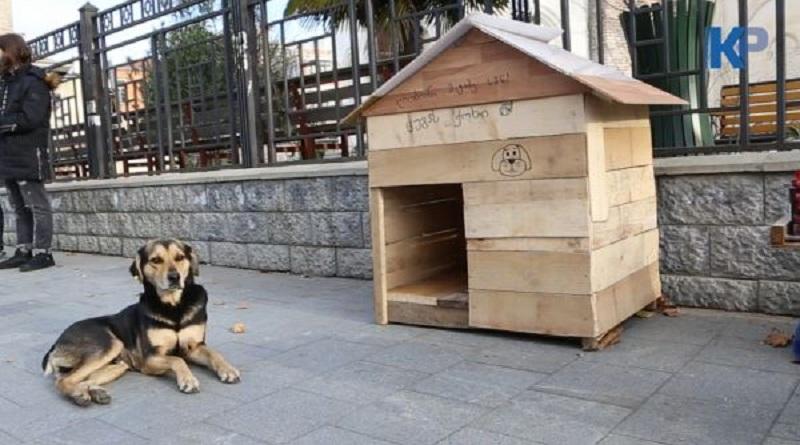 ქუთაისში მიუსაფარ ძაღლს სტუდენტებმა სახლი აუშენეს (ვიდეო)