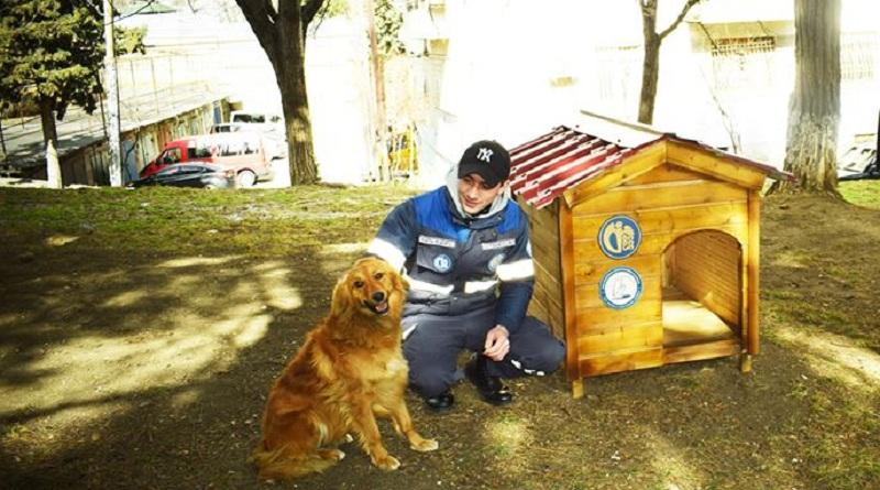კრწანისისა და დიდუბის რაიონში მიუსაფარ ძაღლებს ხის სახლები დაუდგეს (ფოტო)